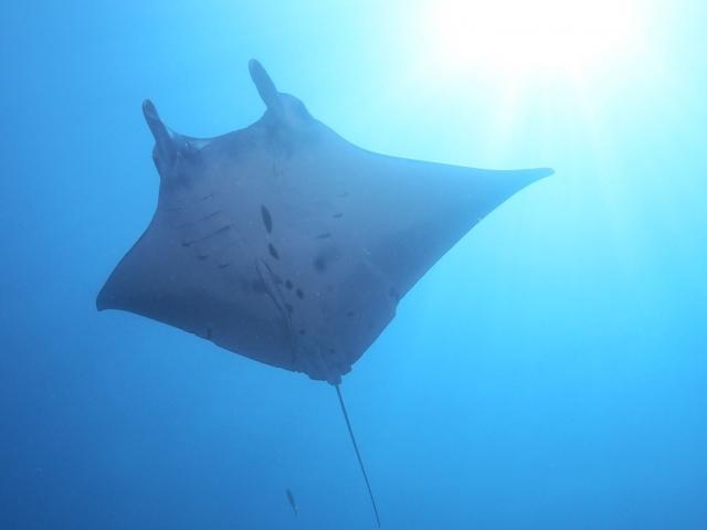 海の生物との出会い