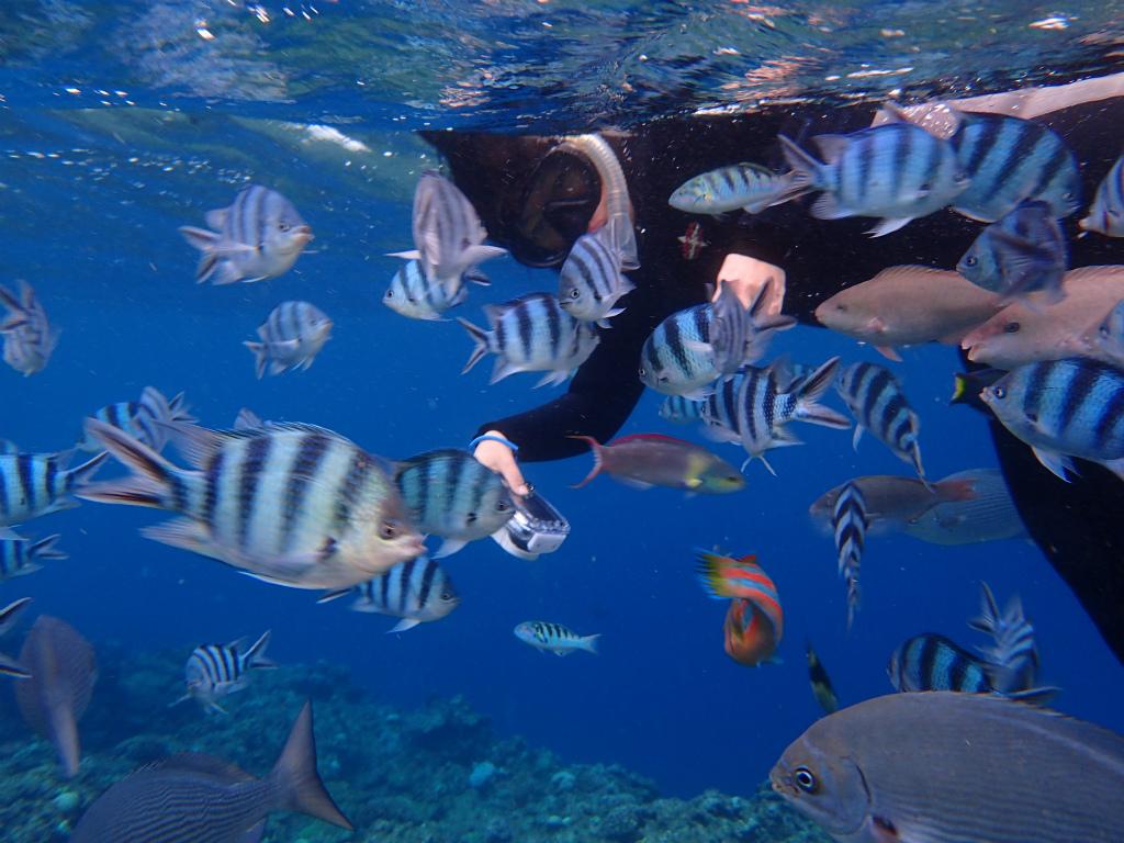 青の洞窟で熱帯魚と触れ合おう