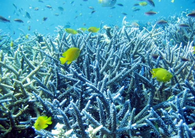 沖縄の綺麗な海は奇跡とも言える自然の産物